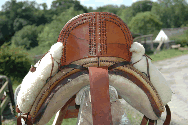 Spanish Doma Vaquera