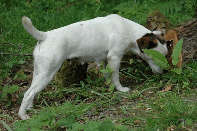 Kitty Jr Terrier